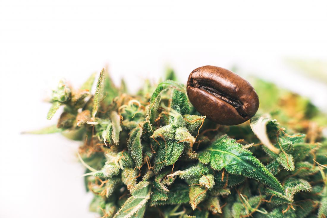 Cannabis and coffee bean