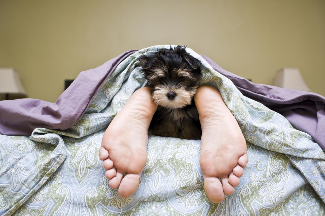 cute puppy peeking out between owners feet at bottom of bed