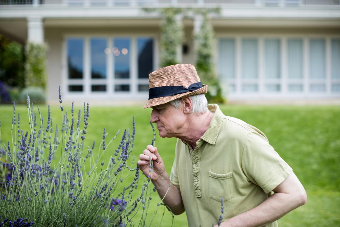 old man smelling lavender