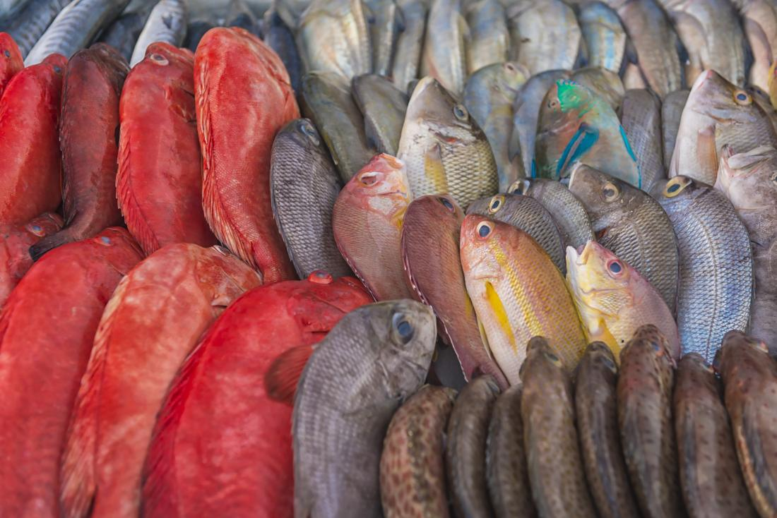 Collection of colorful fish