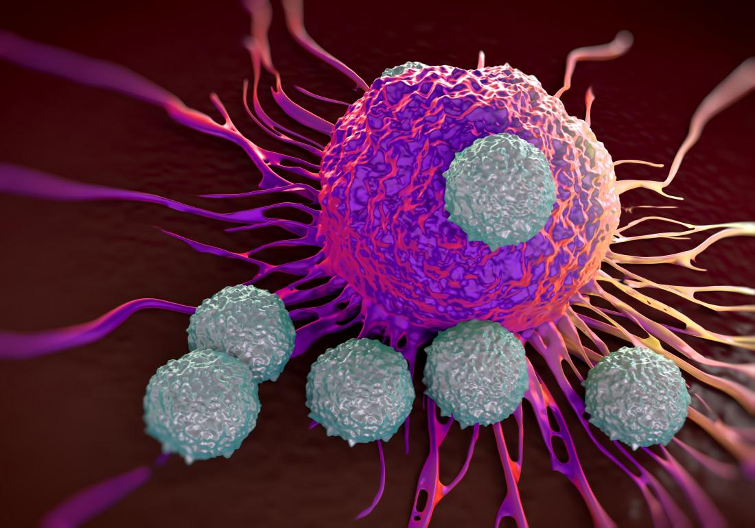 t cells and cancer cells