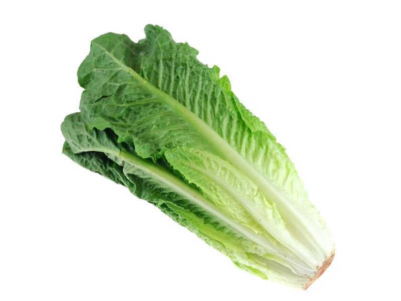 News Picture: First Death Reported in E. Coli Outbreak Tied to Romaine Lettuce
