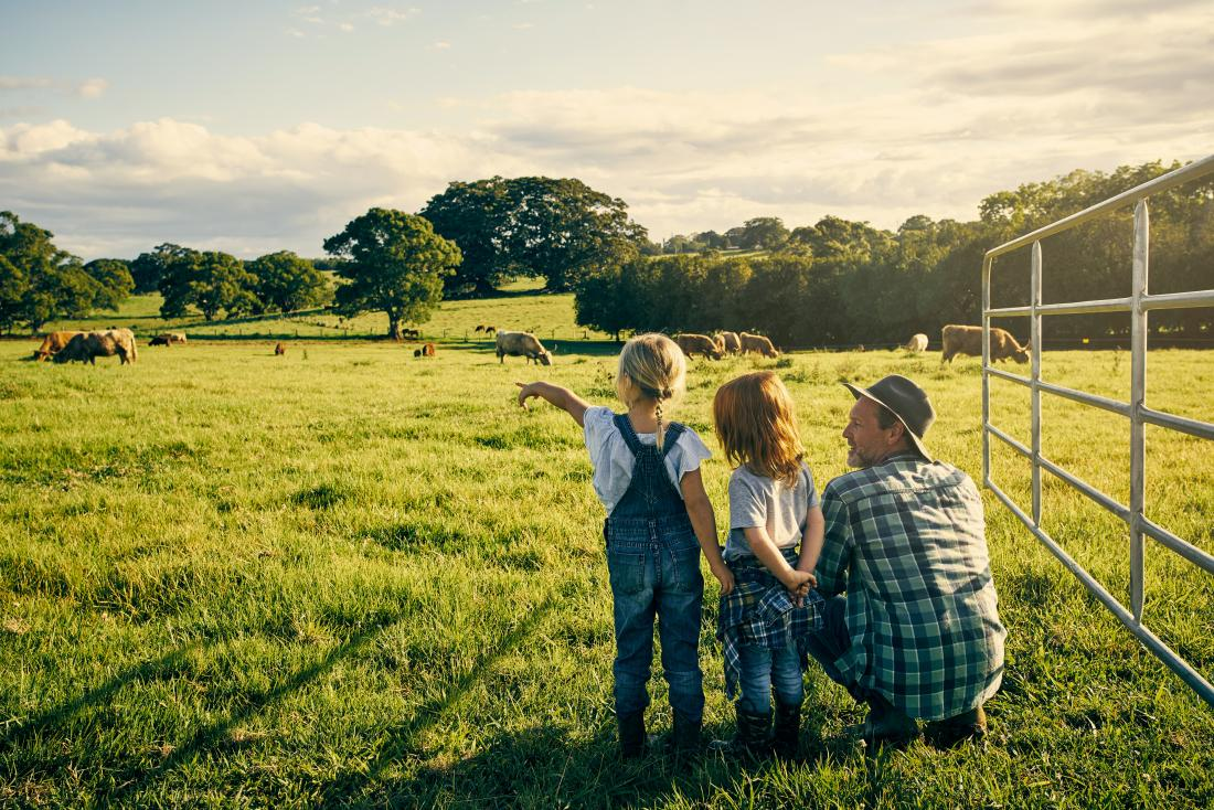 cows in a field with children