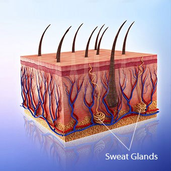 Sweat glands within the basal layers of the skin become clogged, causing heat rash.