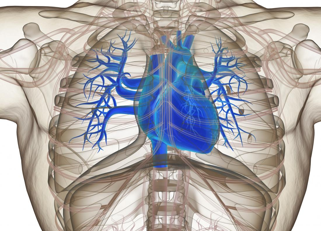 Blue heart in chest diagram