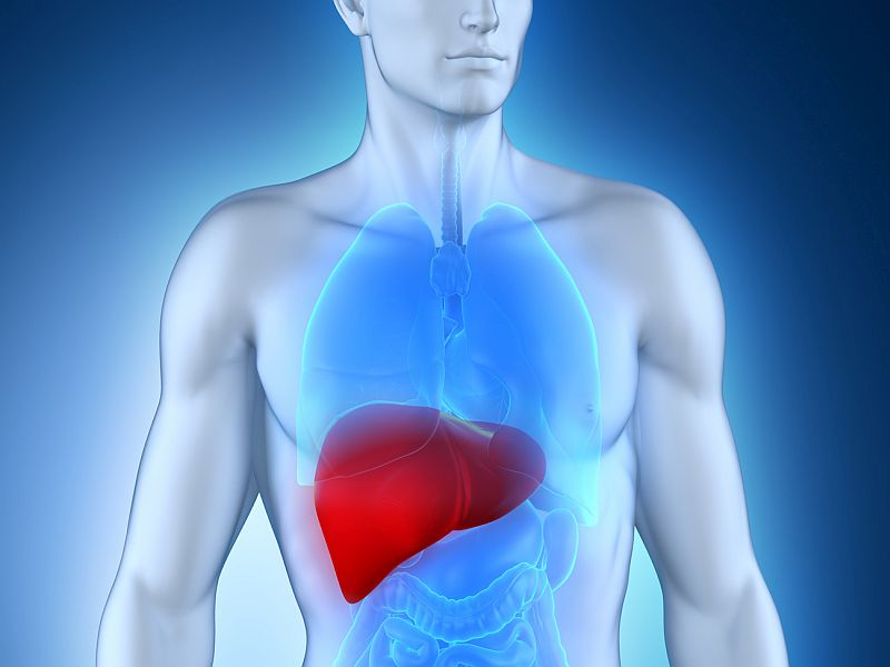 News Picture: How Transplanted Livers Guard Against Organ Rejection