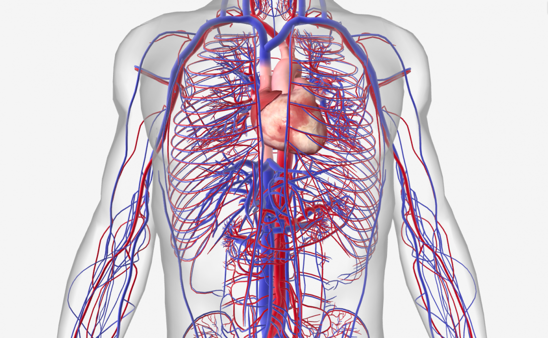 Cardiovascular system with diseases