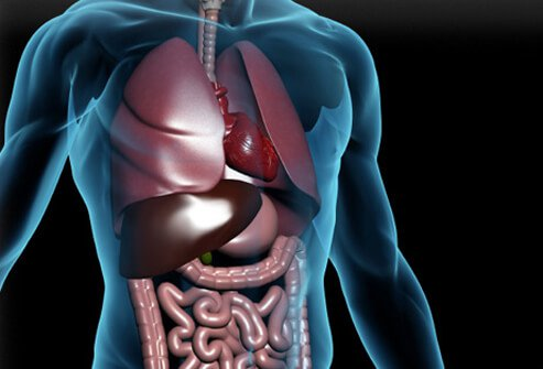 Digestive Disorders: Common Misconceptions