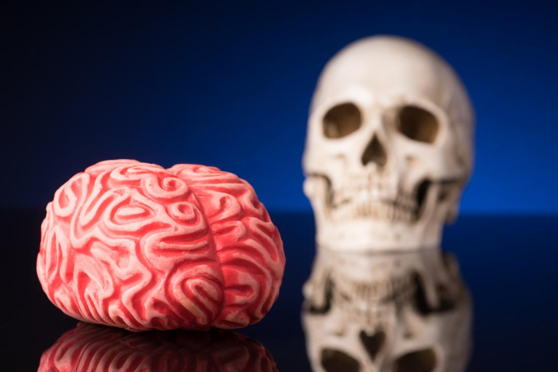 concept photo featuring human brain and skull models