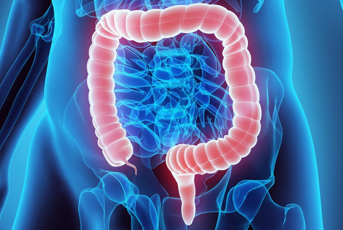 concept illustration of human colon