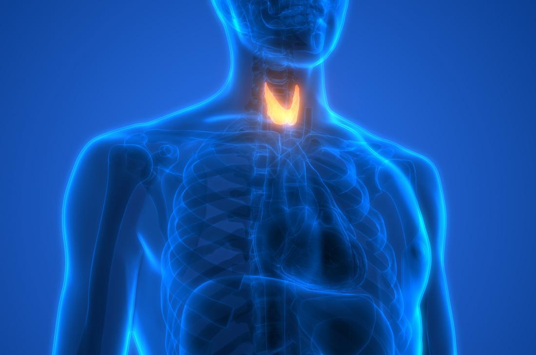 Diagram of the thyroid gland