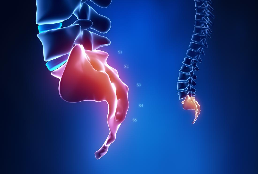 Tailbone or coccyx