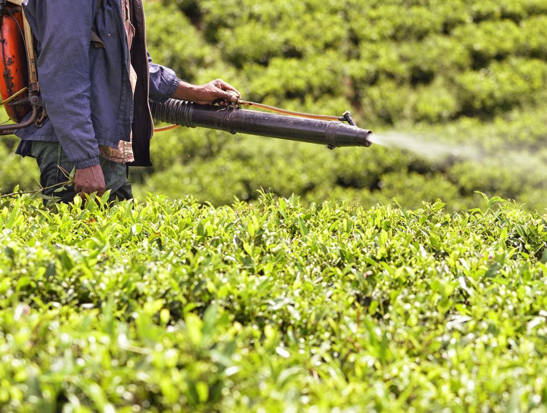 DDT spraying crops