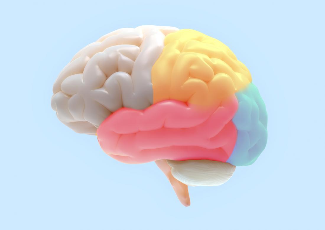illustration of brain regions