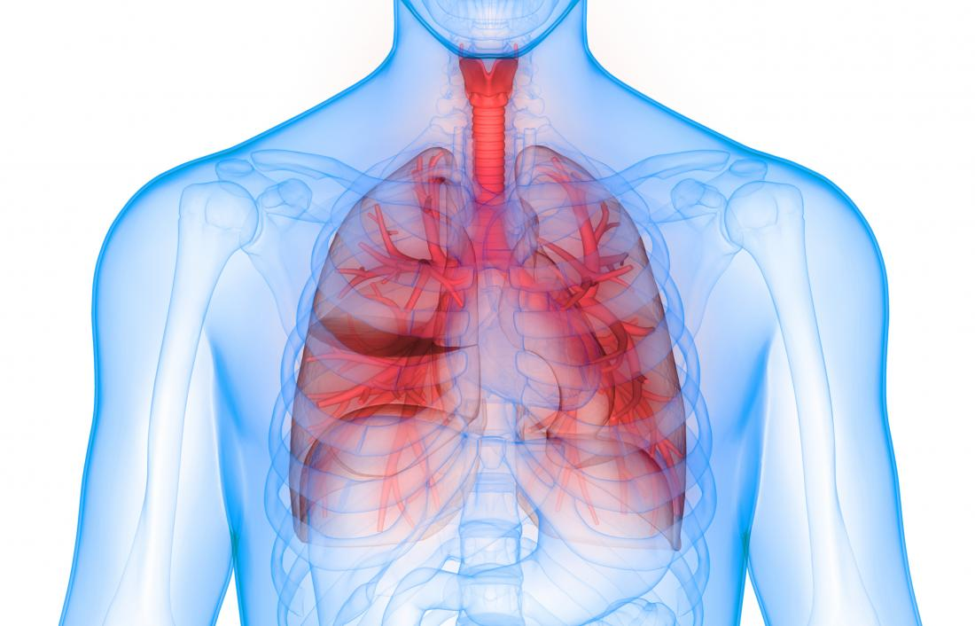 3D render of lungs.