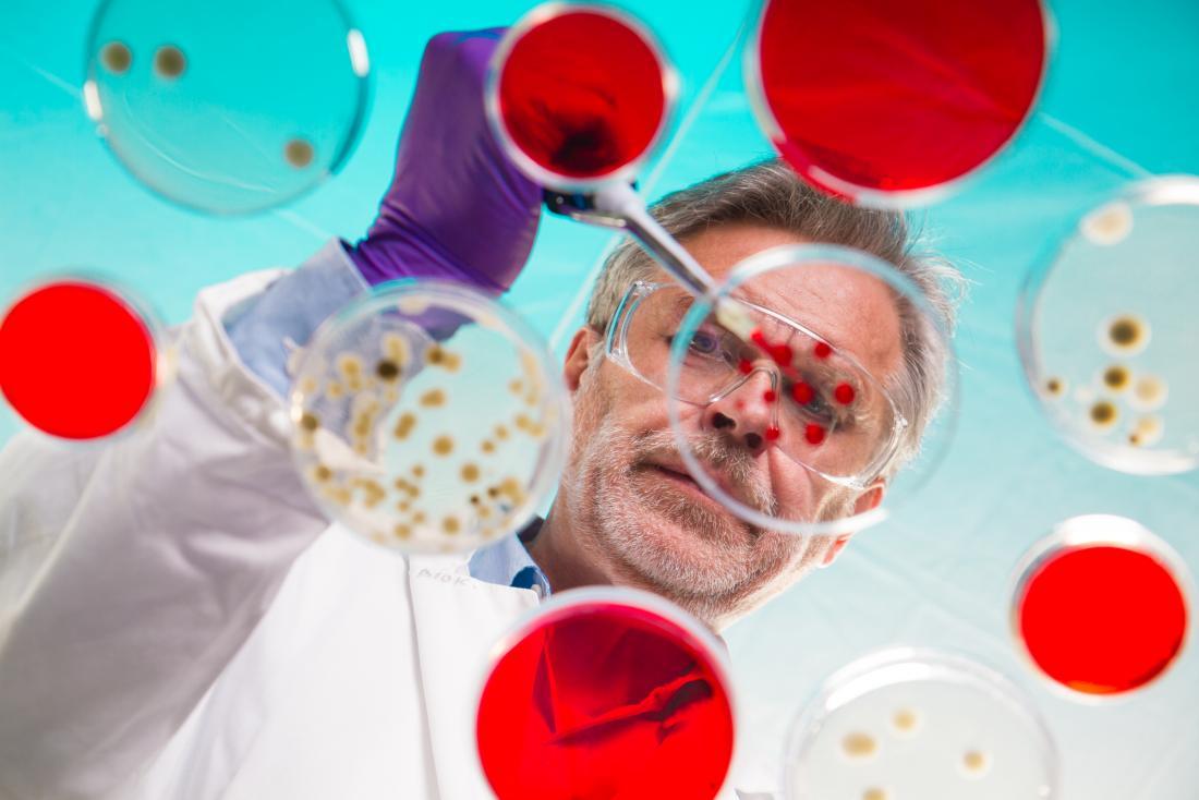 scientist regrafting bacteria