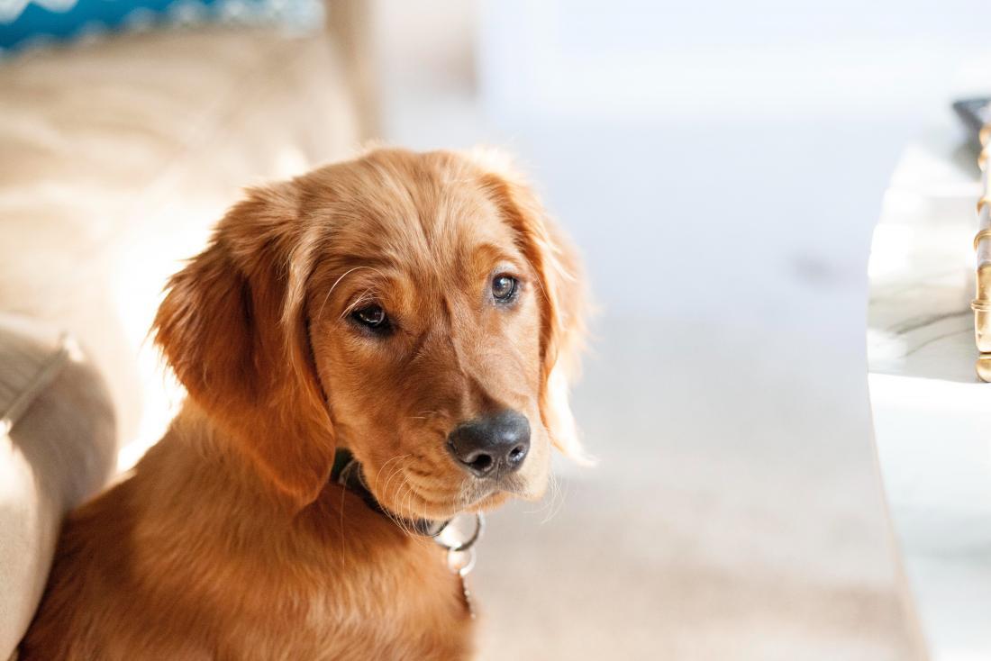 shot of a dog