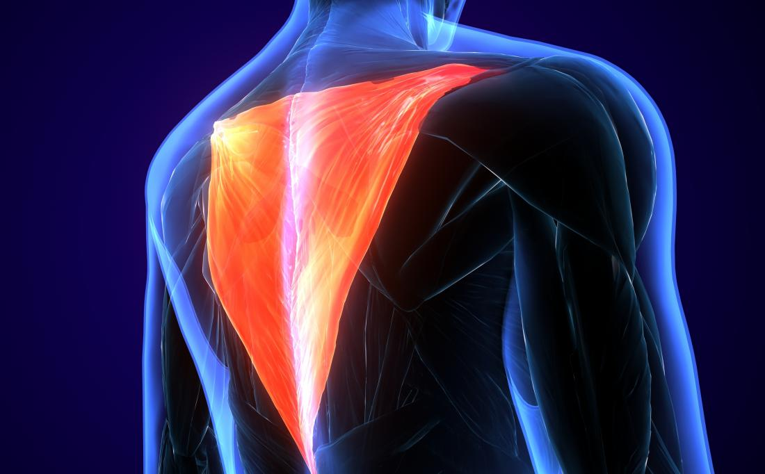 The trapezius muscle is part of the upper back.