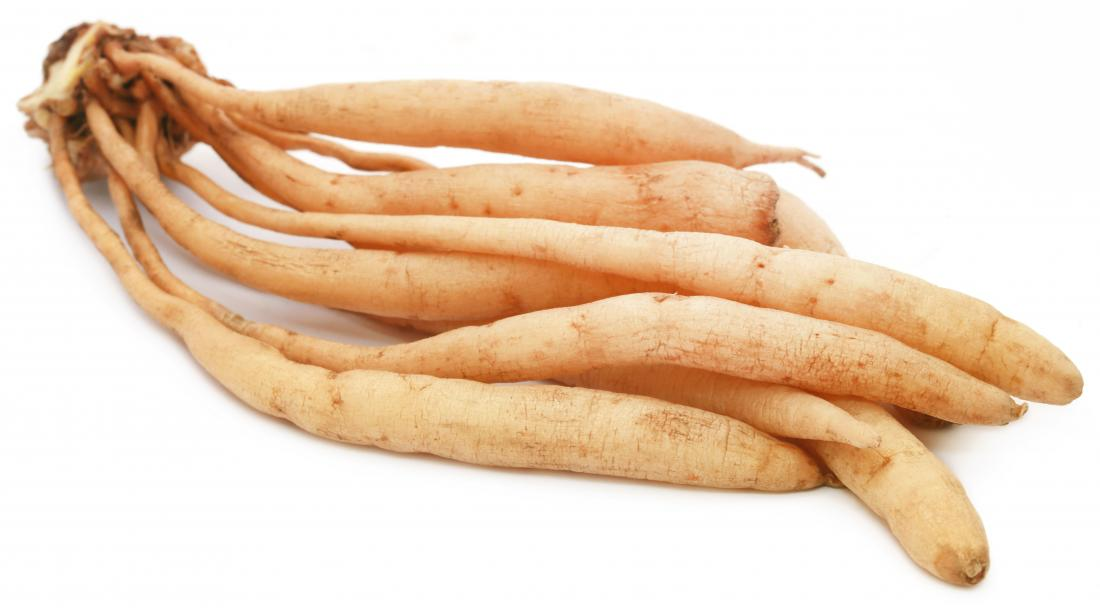 shatavari in root form