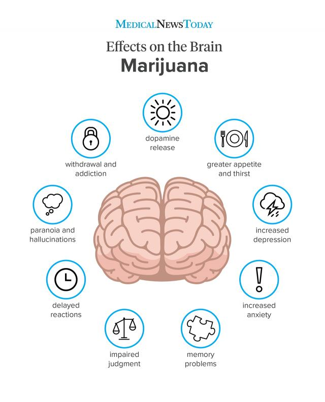 Marijuana effects on the body and brain