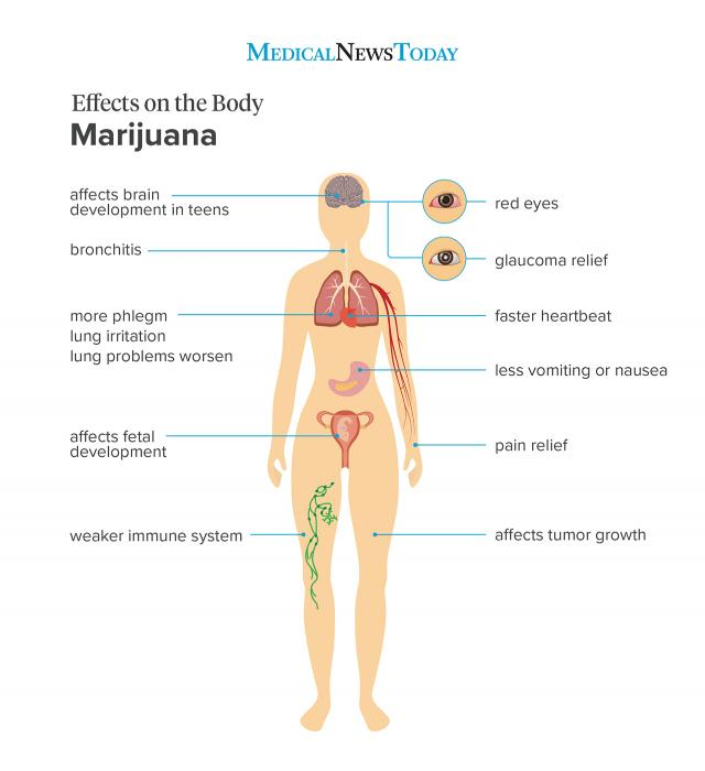 Marijuana physical effects on the body