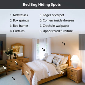 A bedroom shows areas where bedbugs are found.