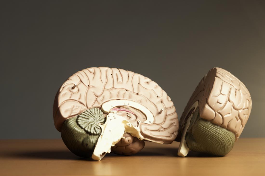 Brain split in two