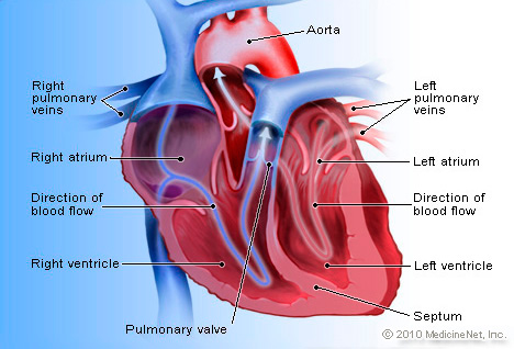 Picture of Heart in Detail