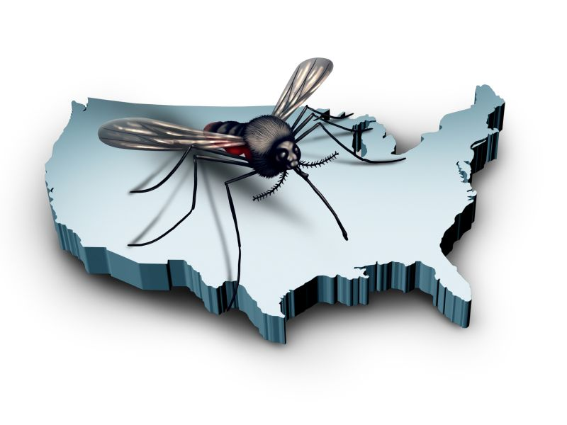 News Picture: It's Mosquito Season: Here's How to Protect Yourself
