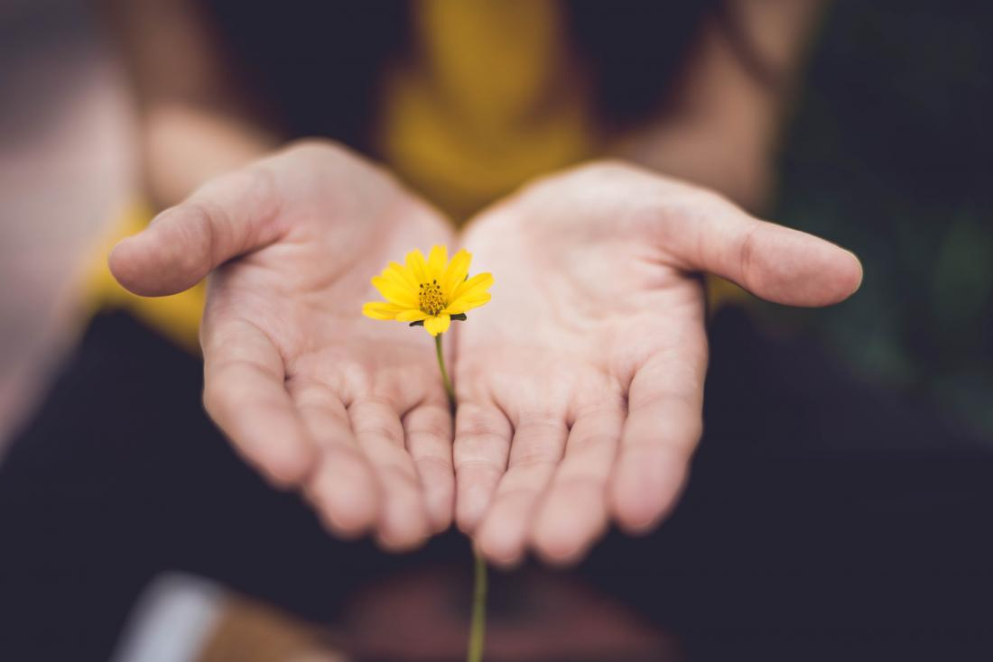 someone offering a yellow flower