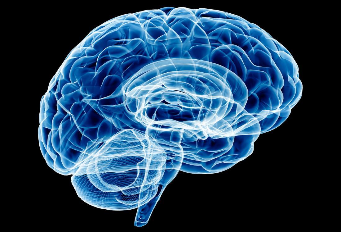 brain x-ray illustration