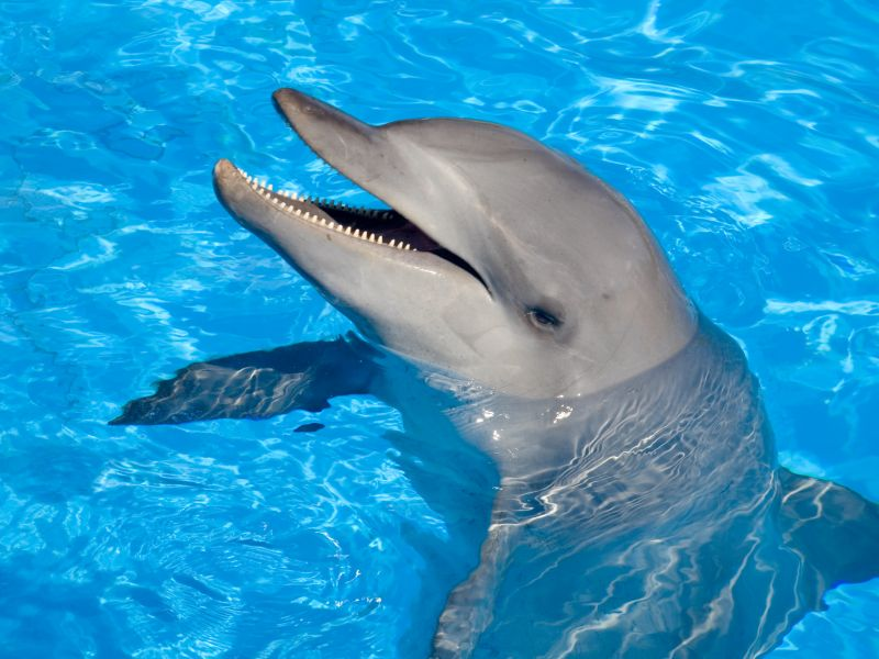 News Picture: Even Dolphins Are Threatened by Antibiotic-Resistant 'Superbugs'