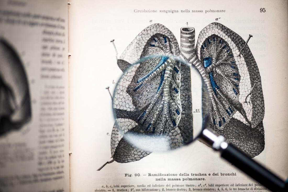 illustration of lungs