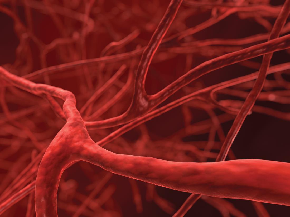 illustration of blood vessels