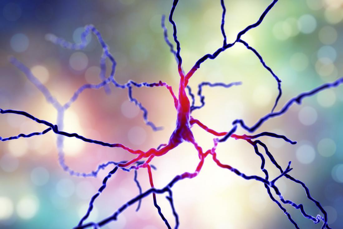 dopaminergic neuron