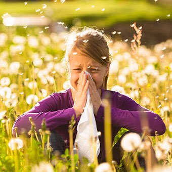 Sneezing due to seasonal allergies disperses mucus droplets into the air.