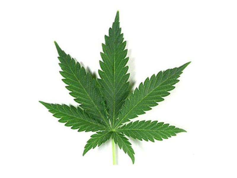 News Picture: 'Dabbing' Marijuana a Gateway to Heavy Use of Pot