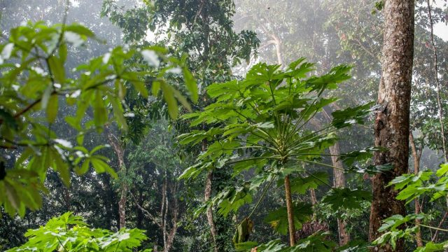 Rainforest vine compound kills resilient cancer cells