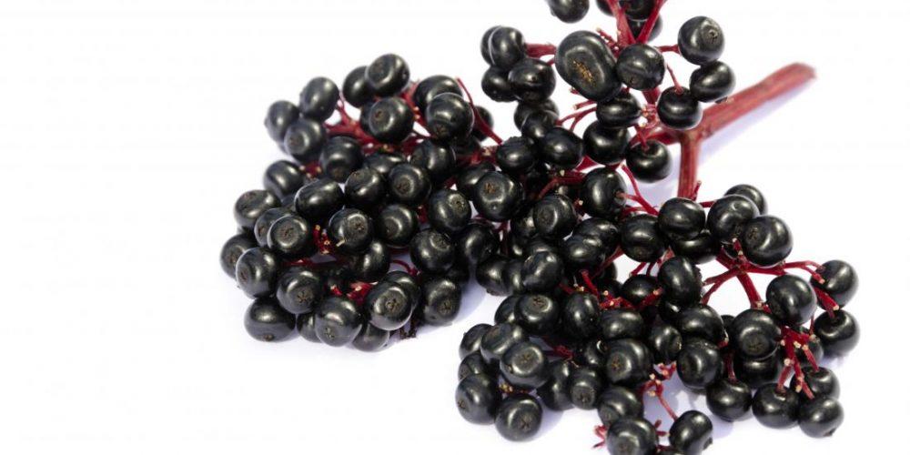 Health benefits of elderberry