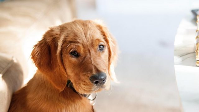 How a dog can make it easier to manage diabetes