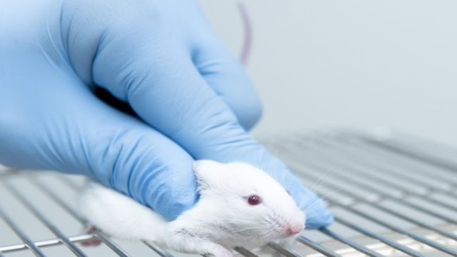 Can Alzheimer's Be Spread? Mouse Study Hints It's Possible