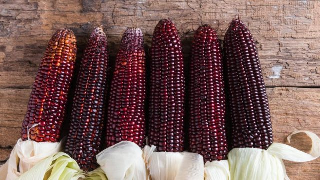 Can purple corn reduce inflammation, diabetes?