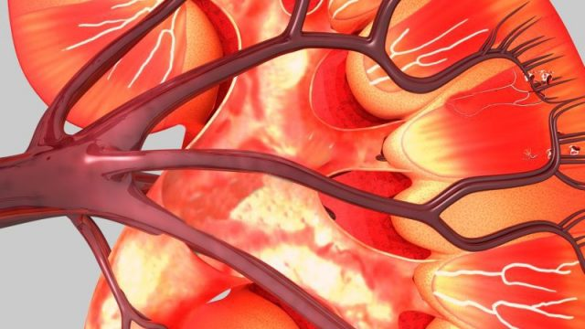 Common Diabetes Drug May Also Shield Kidneys, Heart