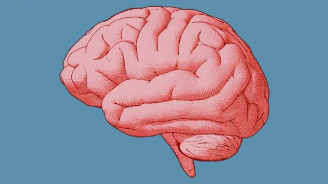 Stimulating brain with ultrasound can influence decisions