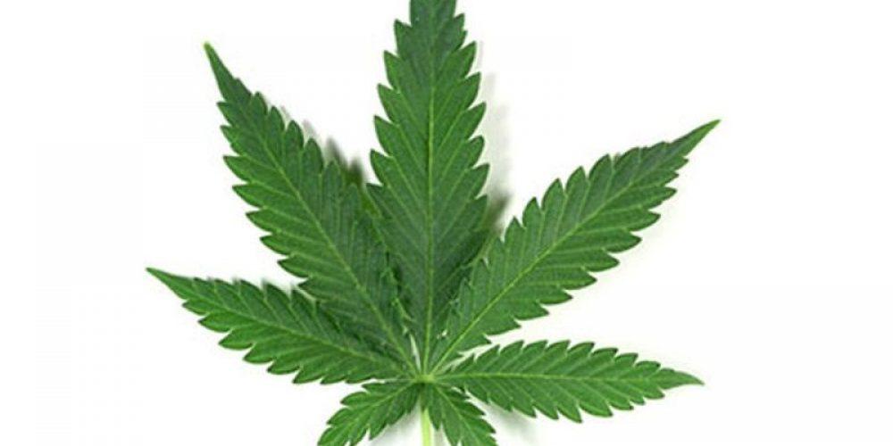 Medical Marijuana Use Rising Among Cancer Patients