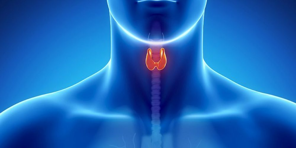 Cancer Risk Rises After Iodine Rx for Overactive Thyroid: Study