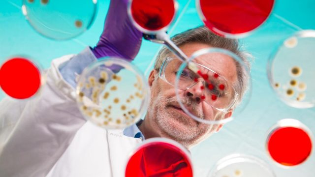 Candida infection can reach brain and impair memory
