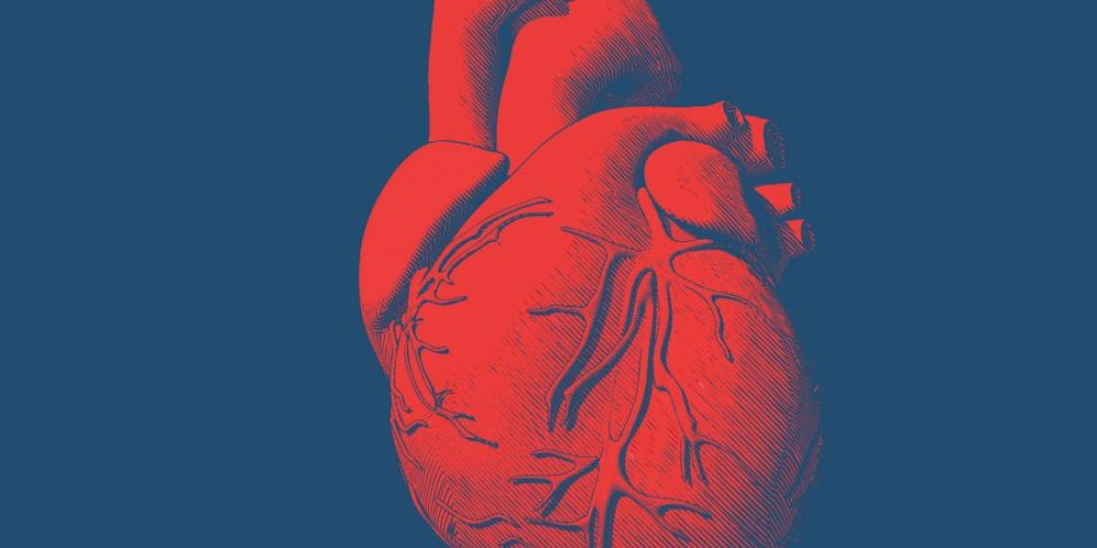 New drug limits damage to heart muscle from heart attack