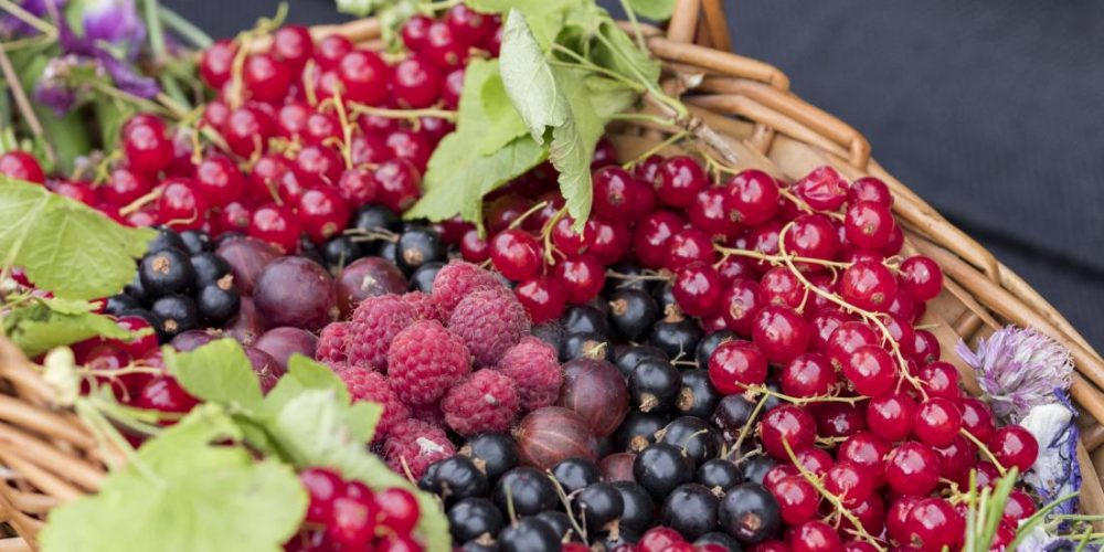 A natural pigment can help decrease cardiovascular risk