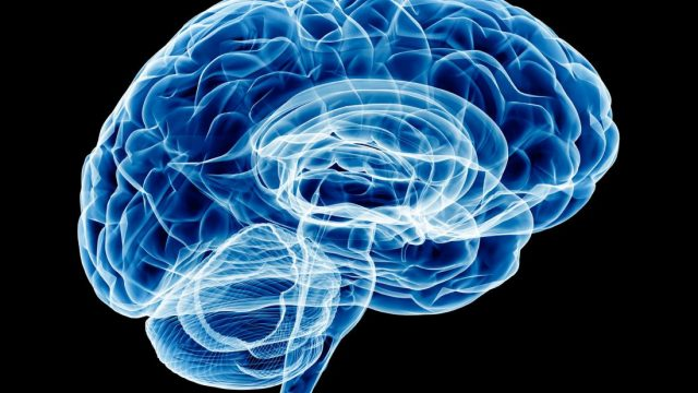 Brain study probes molecular origins of anxiety